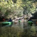 Etowah kayaking